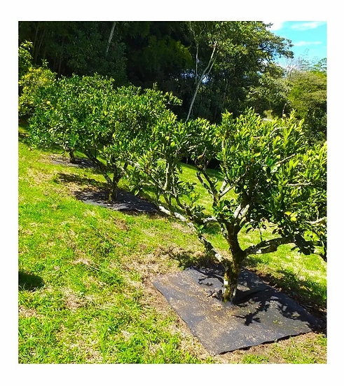 Manto Anti Maleza Para Arboles Cultivos Paquete X 5 Unidades