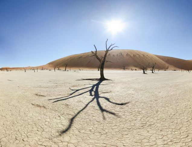 5-Ways-on-How-to-Stop-Desertification-53