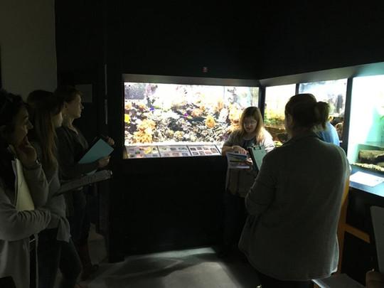 Muséum Tournai