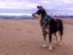 Dog-On-Beach-unsplash5_edited_edited_edi