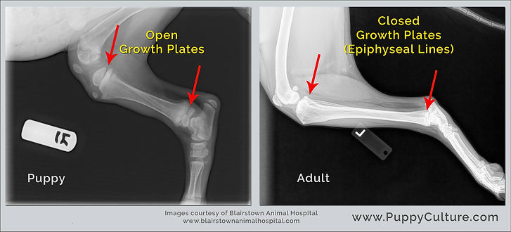 Growth Plate X-ray.jpg