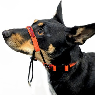 BlackDog Training Halter