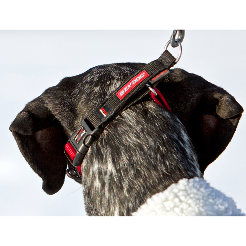 Ezydog Martingale Training Collar