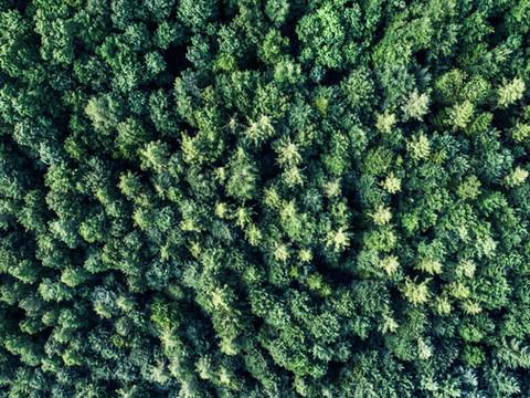 Woods (1).jpg
