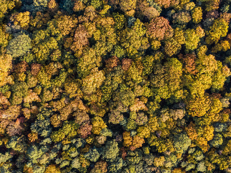 Autumn Trees.compressed.jpg