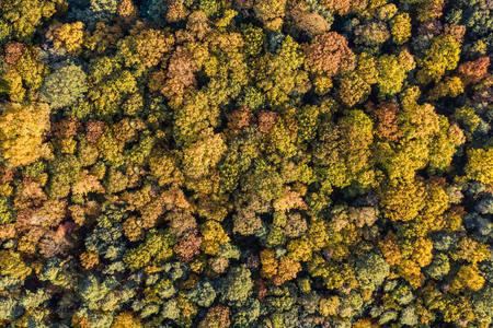 Autumn Trees, 2020.