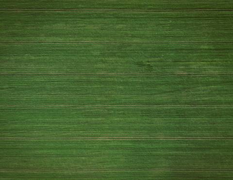 Green Field 2.jpg