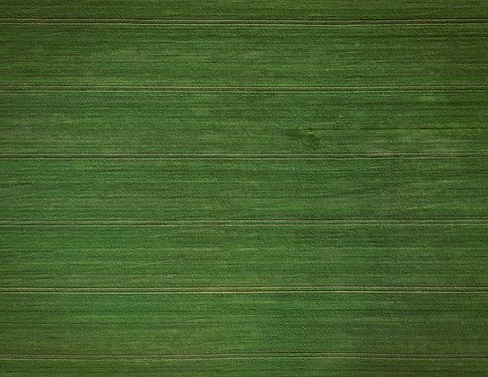 Green Field, 2018.