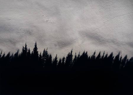 Shadow Trees, 2019.