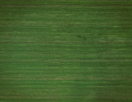 Green Field, 2020.