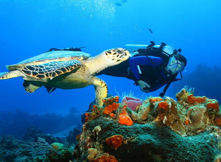Tips for interacting with marine life