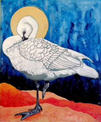 Swan / Allo
