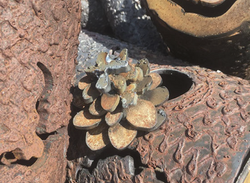 PineCone Accent - Fire - Iron Log