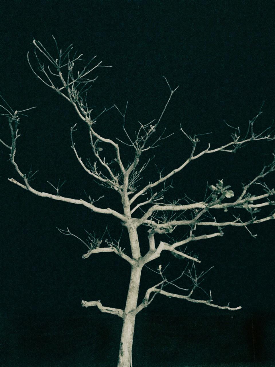 tree. 陳云 chenyun