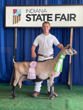 Tysen Weible, Reserve Grand Champion Goat, Indiana State Fair