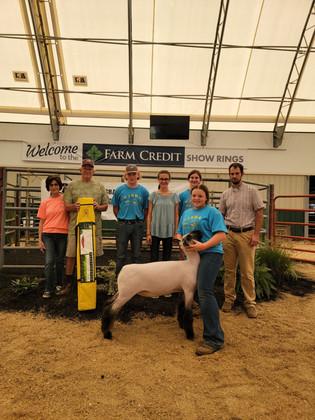 Elissa Caricofe, Reserve Grand Champion Ewe, Virginia Junior Sheep Breeders Association