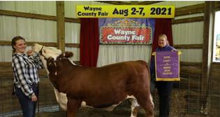 Jenna Budd, Reserve Grand Champion Market Steer, Wayne County Fair 2021.jpg
