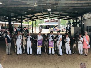 Peyton Heeter, Reserve Supreme and Grand Supreme Heifer, Huntingdon County Fair 2021.jpg