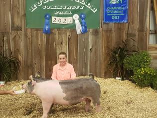 Megyn Schout, Grand Champion Light Weight Gilt, Hudsonville Community Fair 2021
