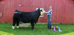 Marc Hendzel, Grand Champion Overall Market Steer, Fowlerville Family Fair 2021