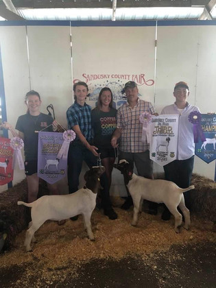 Garratt Warner, Reserve Grand Champion and 3rd Overall Market Goat, Sandusky County Fair 2021