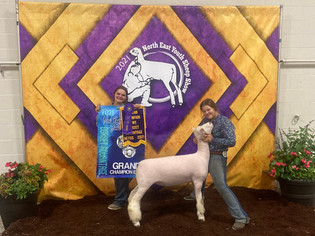 Amanda Rapp, Grand Champion Lamb, North East Youth Sheep Show