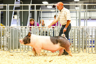 Eric VanValkenburg, Supreme Champion Hog, Erie County Fair