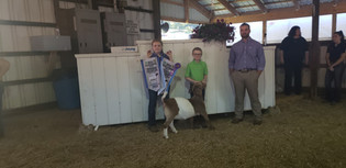 Trindon Richey, Reserve Overall Doe, Junior Champion Doe and Grand Overall 4-H Goat, West