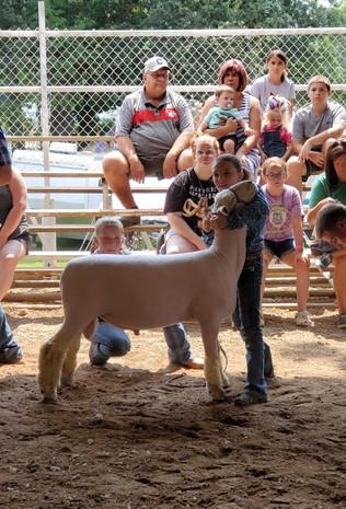 Lucienne Byler, Grand Champion Lamb, Knox County Jr. Fair