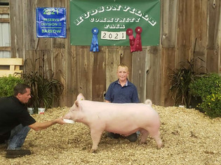 Jacob Schout, Reserve Grand Champion Middle Weight Barrow, Hudsonville Community Fair 2021