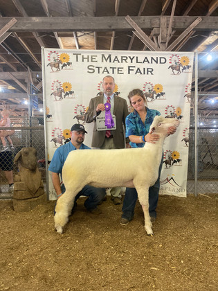 Katherine Rapp, Grand Champion Lamb, Maryland State Fair 2021