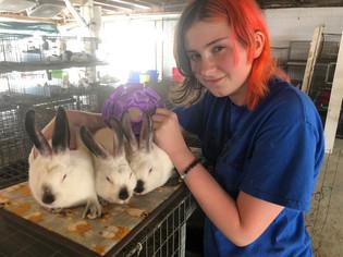Samantha Tiemann, Grand Champion Rabbit, Sullivan County 4-H show