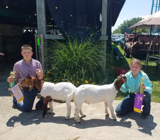 Evan Gould, Reserve Grand Champion Goat, Lenawee County Fair