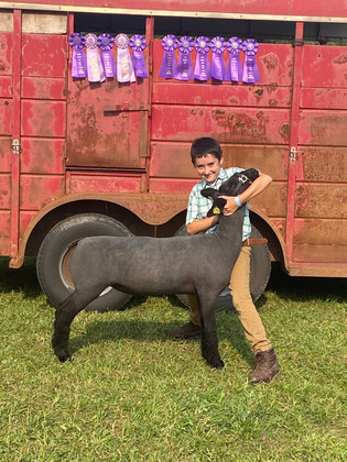 Gavin Kidd, Grand Champion Lamb, Alger County Fair