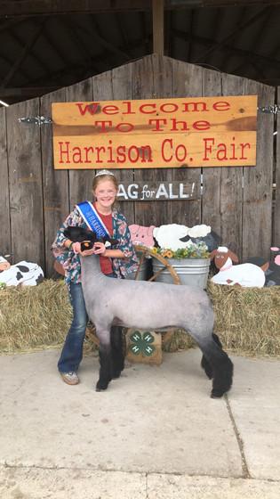 FOC_Neely Ryder_Reserve Lamb_Harrison county fair.jpeg