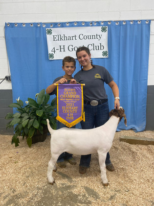 Abigail Gall, Reserve Grand Champion Goat, Elkart County 4H Goat Show