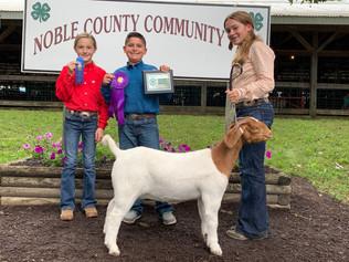 FOC_Keira Lortie_GC Goat_Noblke County 4H Meat Goat show.jpg