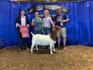 Cameron White, Reserve Grand Champion Goat, Tennessee State Fair