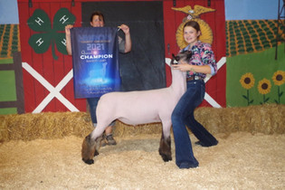 Emily Stevens, Grand Champion Market Lamb, Huron County Fair 2021