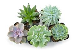 upload - succulents.png
