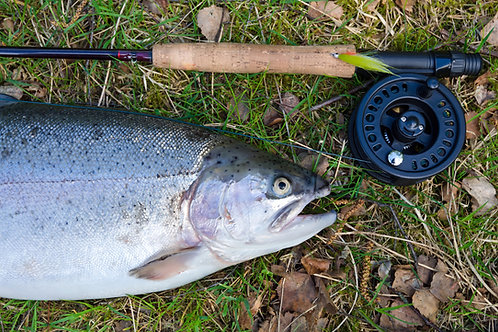 2 HOUR FLY FISHING EXPERIENCE