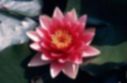 azulmavi flamenko