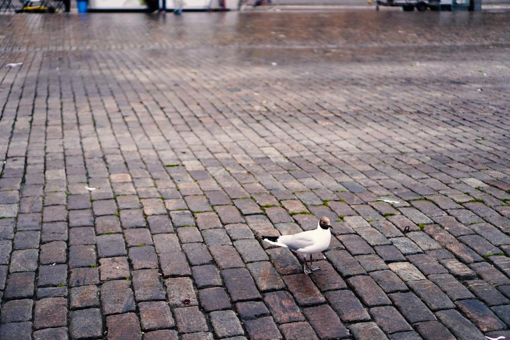 Alone under the Rain