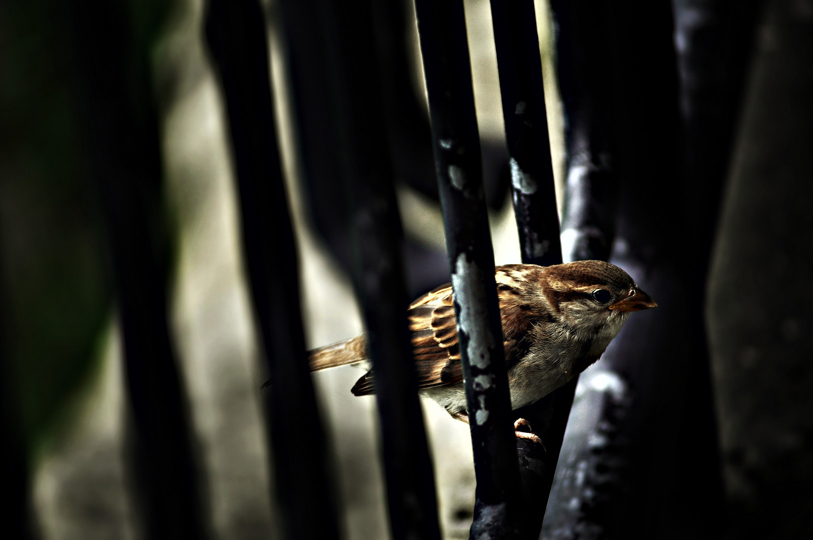 Prison for the Bird