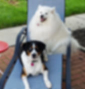 Our dogs, Angel and Eli