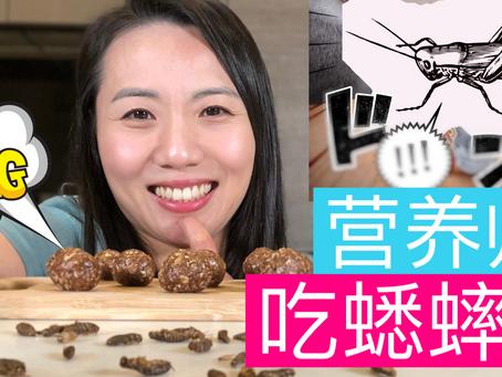 人类未来的饮食?!营养师聊蟋蟀的营养价值 【健康高蛋白零食食谱分享】