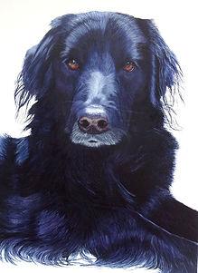 Ollie, pet portrait, Katherine Cromwell, borador. poole artsit, dorset artist, painting, acrylic painting, statement portrait