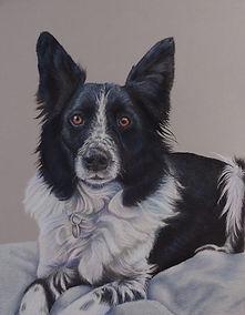 Oscar, border collie, pastel, pastel portrait, pet portrait, Katherine Cromwell, poole artist, dorset artist