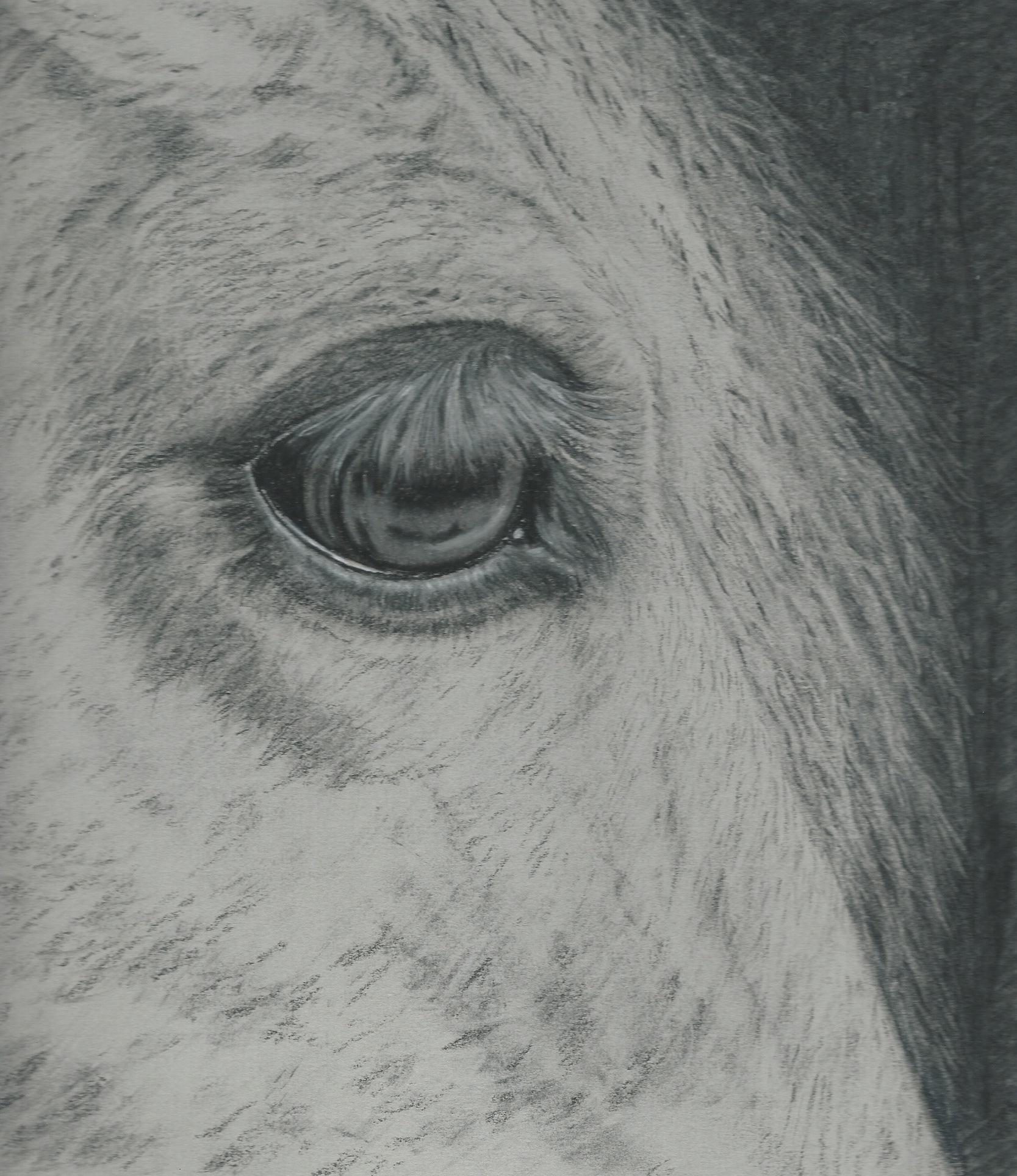 Horse charcoal eye