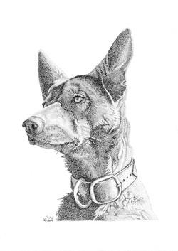 Ruby-reddog